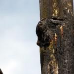 Glühende Lavafetzen brannten sich in das Holz der Bäume ein.
