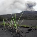 Junges Grün sprießt in der Vulkanasche. © Marc Szeglat